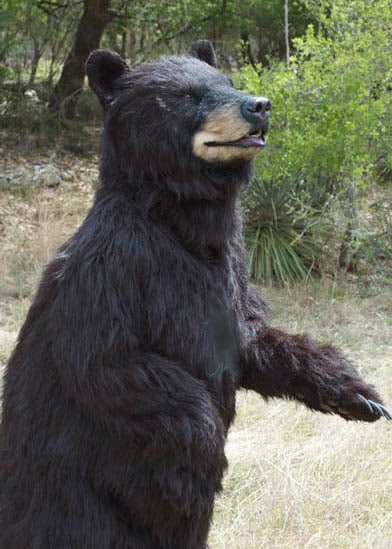 SPFX Realistic Black Bear Special effects costume