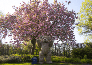 realistic teddy bear costume for hire blossom