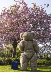 Larger than life teddy bear mascot Bentley the bear out for a stroll amongst the blossom trees