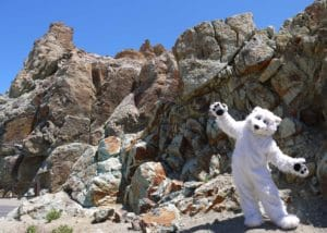Our official Character Beary visits mt teide Tenerife spain