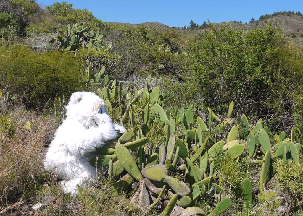 Our official Mascot Beary visits Tenerife spain