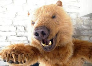 Realistic Kodiak Grizzly animal costume Filming
