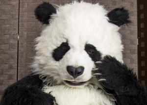 Hire a Realistic Animatronic Panda creature suit By Mascot Ambassadors