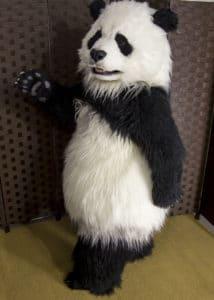 Hire a Realistic Animatronic Panda SPFX suit By Mascot Ambassadors