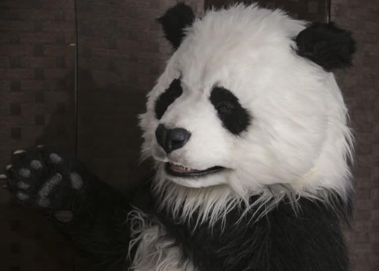 Realistic Panda suit