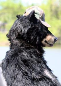SPFX realistic Bear suit