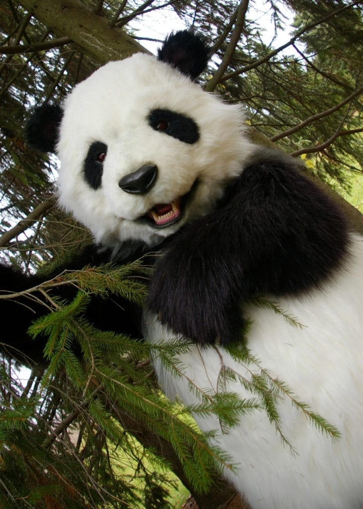 Manchu The Animatronic lifelike Panda Costume By Mascot Ambassadors
