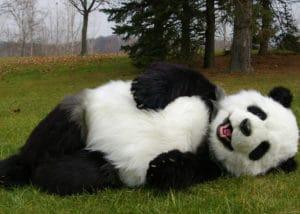 Manchu The Animatronic Special Effects Panda Costume By Mascot Ambassadors