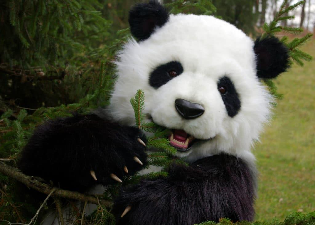 Manchu The Animatronic SPFX Panda Costume By Mascot Ambassadors