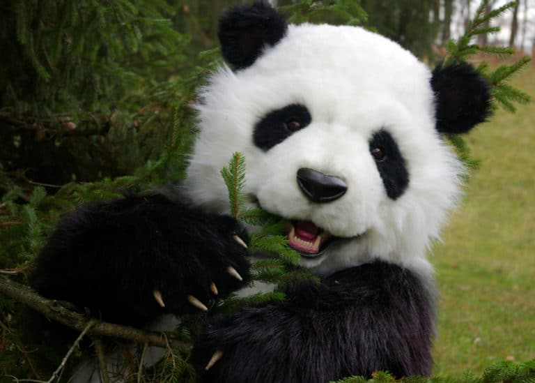 Manchu The Animatronic SPFX Panda Costume By Mascot Ambassadors