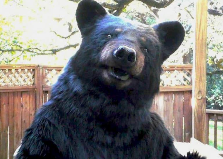 realistic Animatronic Bear suit