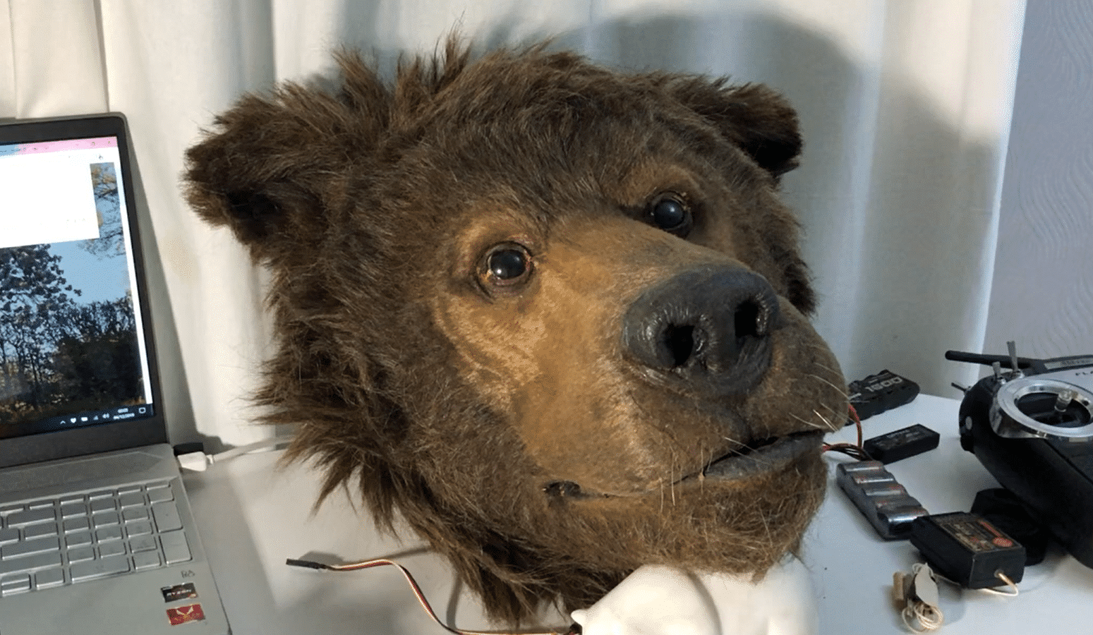 realistic bear suit Wild america