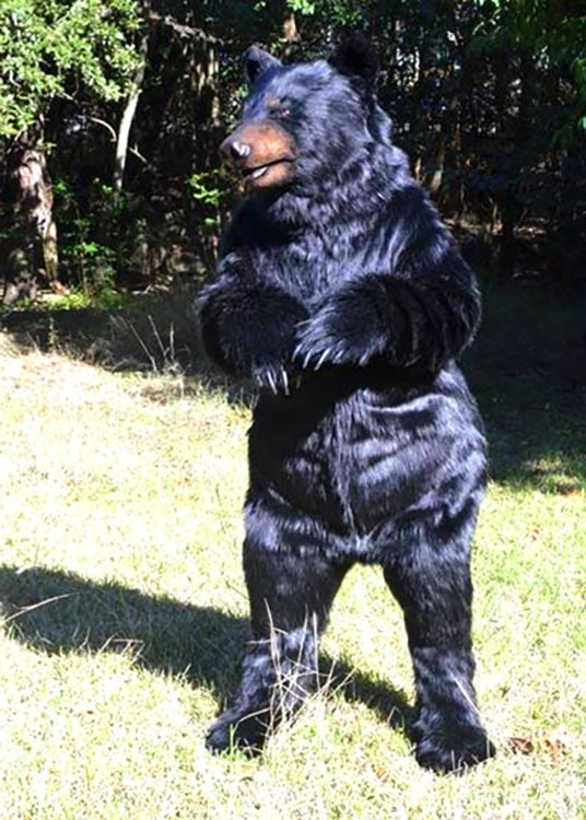 realistic bear suit for hire