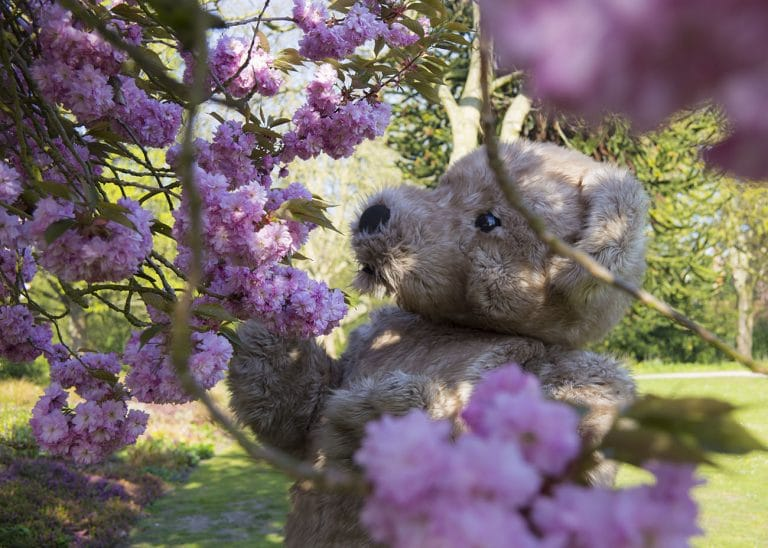 Teddy Bear Mascot with Cherry Blossom