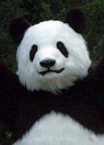 realistic panda costume for TV